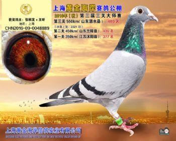 上海黄金海岸决赛第400名