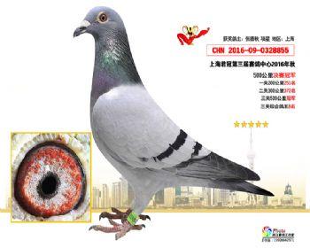 上海君冠决赛冠军