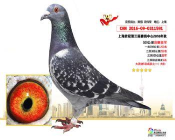 上海君冠决赛亚军