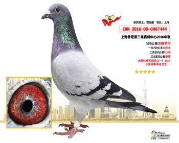 上海君冠决赛季军