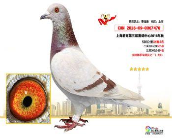 上海君冠决赛4名