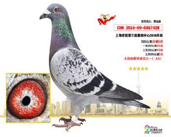 上海君冠决赛5名