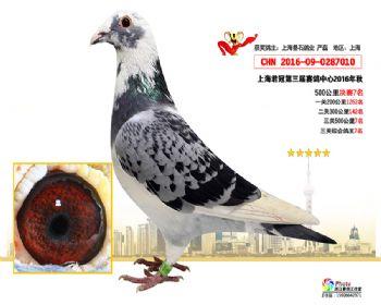 上海君冠决赛7名