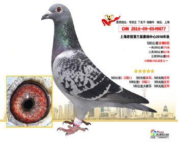 上海君冠决赛8名