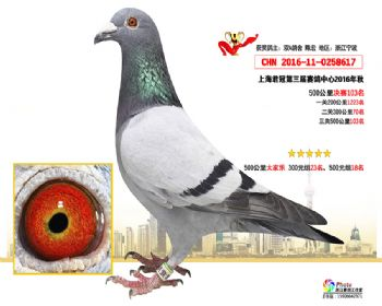 上海君冠决赛103名