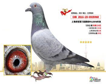 上海君冠决赛104名
