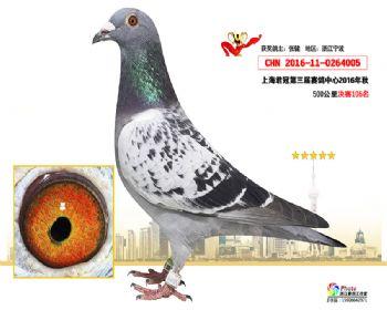 上海君冠决赛106名