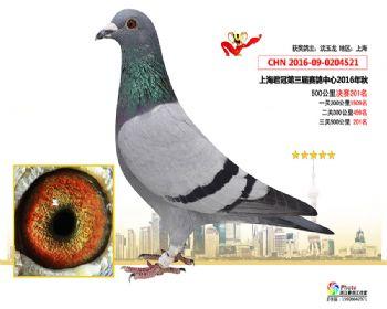 上海君冠决赛201名