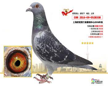 上海君冠决赛202名