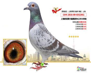 上海君冠决赛203名