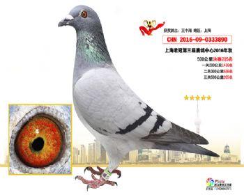 上海君冠决赛205名