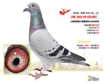 上海君冠决赛206名