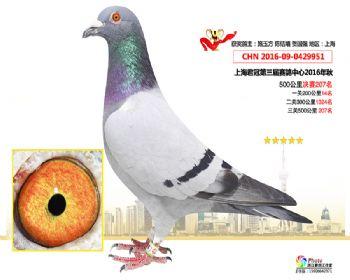 上海君冠决赛207名