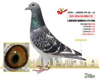 上海君冠决赛301名
