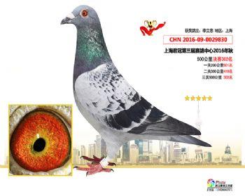 上海君冠决赛302名