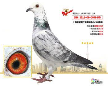 上海君冠决赛303名