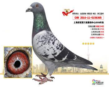上海君冠决赛304名