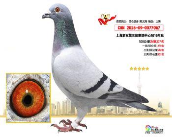 上海君冠决赛307名