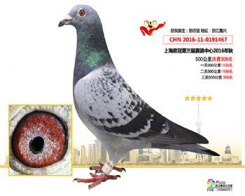 上海君冠决赛308名