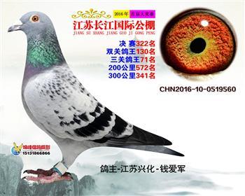 江苏长江决赛322名