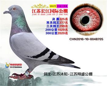 江苏长江决赛325名