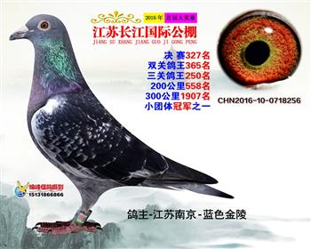江苏长江决赛327名