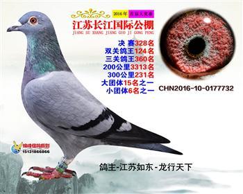 江苏长江决赛328名
