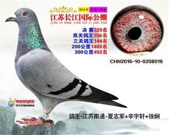 江苏长江决赛329名