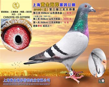 上海黄金海岸决赛亚军