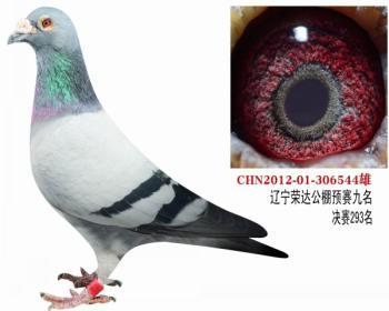 北京壹号鸽舍