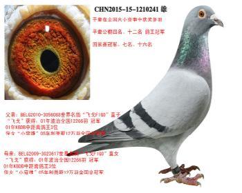 """世界名鸽""""飞戈FIGO""""直子X世界名鸽""""飞戈FIGO""""直女"""