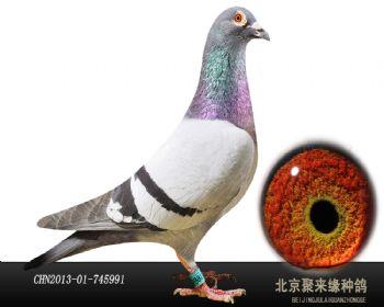 【公棚首选】胡本.年轻艺术家991种雄