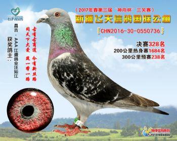 新疆飞天决赛328名