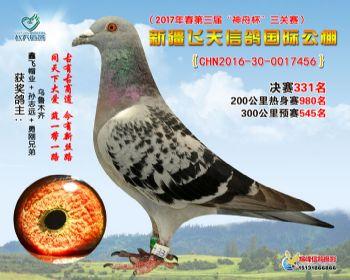 新疆飞天决赛331名