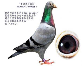 青田黑目028