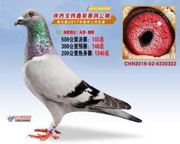 陕西宝鸡鑫昊公棚三关决赛103名