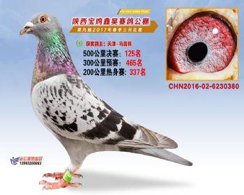 陕西宝鸡鑫昊公棚三关决赛125名