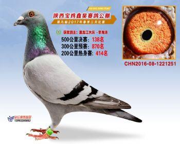 陕西宝鸡鑫昊公棚三关决赛138名