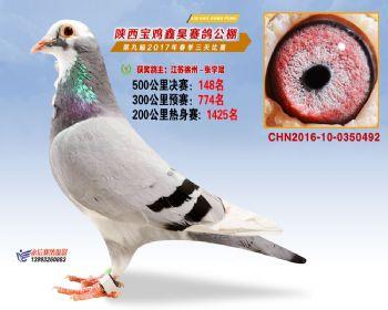 陕西宝鸡鑫昊公棚三关决赛148名