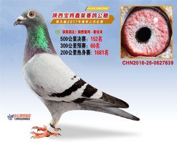 陕西宝鸡鑫昊公棚三关决赛152名