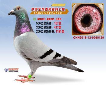陕西宝鸡鑫昊公棚三关决赛157名