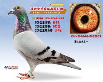 陕西宝鸡鑫昊公棚三关决赛186名