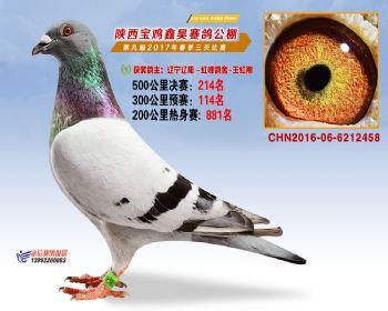陕西宝鸡鑫昊公棚三关决赛214名