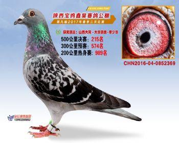 陕西宝鸡鑫昊公棚三关决赛215名