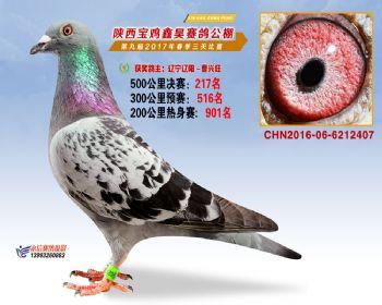陕西宝鸡鑫昊公棚三关决赛217名