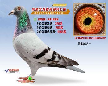 陕西宝鸡鑫昊公棚三关决赛226名