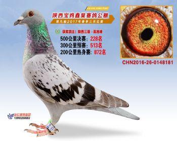 陕西宝鸡鑫昊公棚三关决赛228名