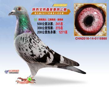 陕西宝鸡鑫昊公棚三关决赛241名