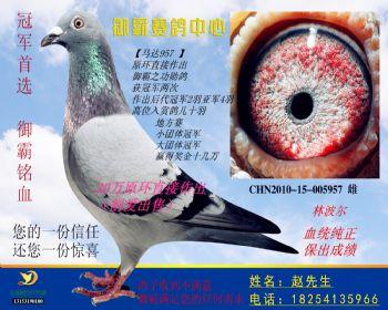 CHN201015005957雌
