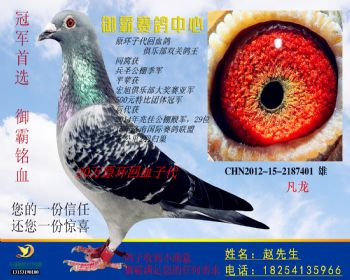 CHN2012152187401雄